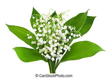 beautiful lilies of the valley isolated on white