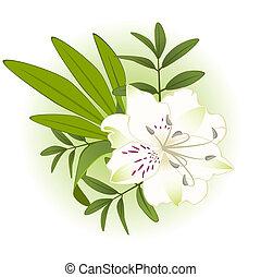 Beautiful Lily design element