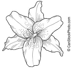 beautiful lily in the style of black and white engraving....