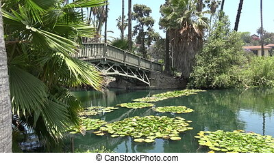 Beautiful lily pond - A bridge over a beautiful lily pond