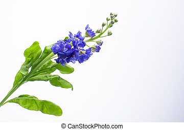 beautiful little blue flowers on white background