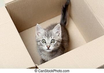 Beautiful little cat in a box