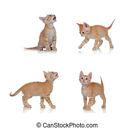 Beautiful little cat in differents positions