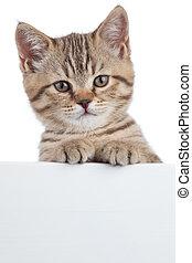 beautiful little cat kitten with white board