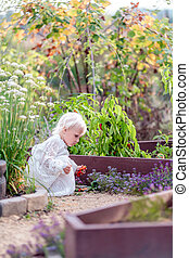 Beautiful Little Child Picking Peppers in Vegetable Garden