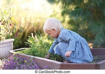 Beautiful Little Toddler Girl Harvesting Vegetables from Garden