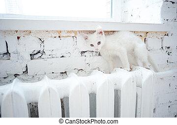 beautiful little white kitten on window sill