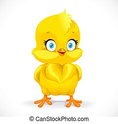 Beautiful little yellow chicken isolated on a white background
