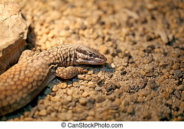 Beautiful lizard photographed