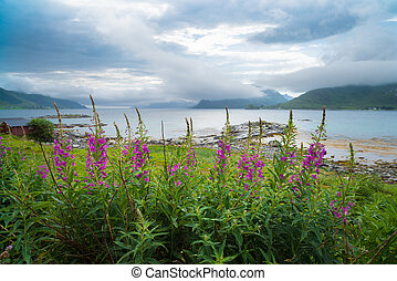 beautiful lofoten landscape