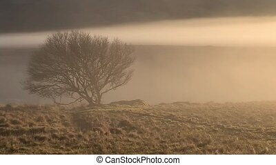 Beautiful lonely tree in the fog in County Donegal - Ireland