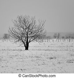 Beautiful lonely tree in winter.
