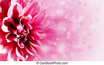 Beautiful lotus flower backgrounds for your design