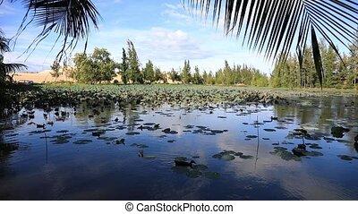 Beautiful Lotus lake near Mui Ne place, Vietnam