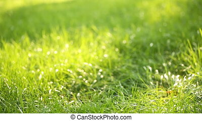 Beautiful low field grass, long macro defocused shot, green...