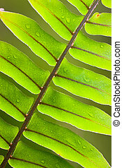 Beautiful close-up of a lush green fern frond with water droplets