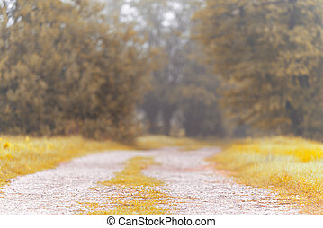 Beautiful macadam road with blurred trees in the background. Misty autumn, summer morning.