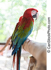 Beautiful macaw bird color red green blue