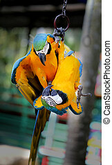 Beautiful macaw parrots