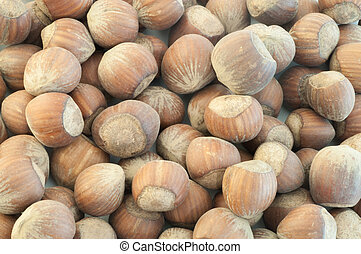 beautiful macro background of harvest of hazelnuts