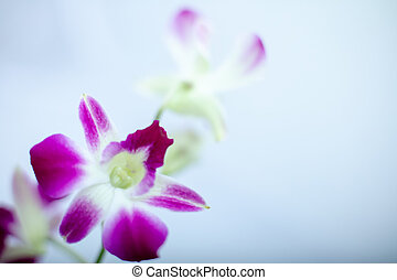 Beautiful macro view Orchid isolated on a color background