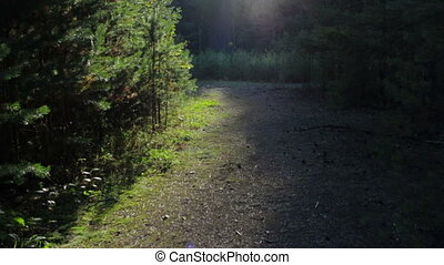 Beautiful magic light in the forest. Atmospheric bright rays...