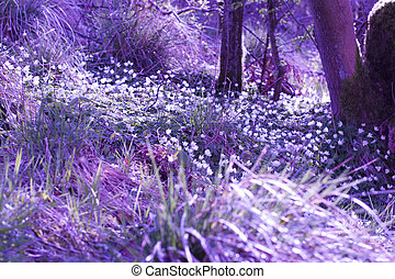 Beautiful, magical Spring flowers in the forest