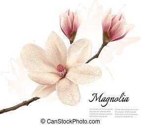 Beautiful magnolia flower background. Vector.