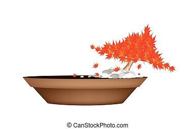 Beautiful Maple Bonsai in A Flower Pot - Houseplant,...