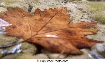 Beautiful maple leaf underwater