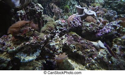 Beautiful marine aquarium with corals - Beautiful marine...