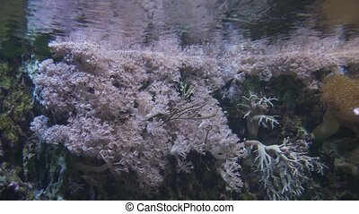 Beautiful marine aquarium with corals stock footage video