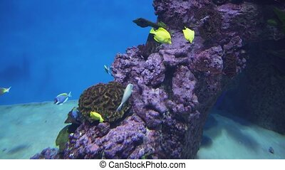Beautiful marine aquarium with tropical fish and corals stock footage video