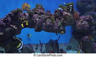 Beautiful marine aquarium with tropical fish and corals...