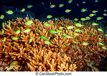 Beautiful marine life, abstract natural background, beauty ...