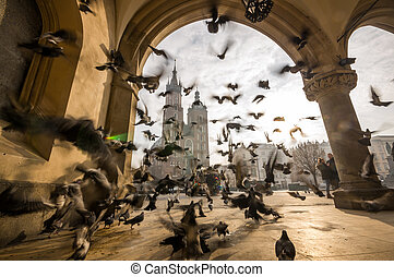 Beautiful market square with birds, Krakow, Poland, Europe