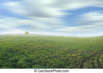 Beautiful meadow and sky-color effect