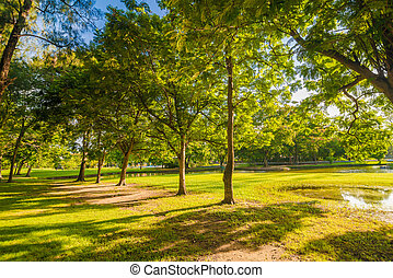 Beautiful meadow and tree in the park