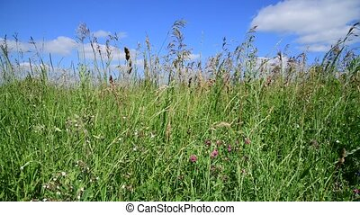 Beautiful meadow grass against sky by day in Russia....