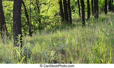 Beautiful meadow in a forest on a sunny day