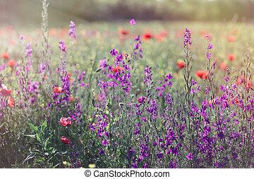 Beautiful meadow in spring - wild meadow flowers