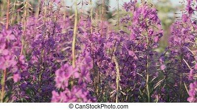 Beautiful Meadow Of Purple Wildflowers