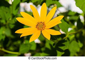 beautiful meadow yellow flower