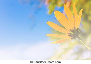 beautiful meadow yellow flower on blue sky