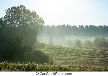 Beautiful misty sunrise landscape