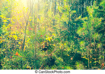 Beautiful, mixed, autumn forest in Poland