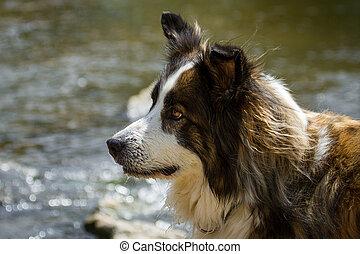 Beautiful mixed breed dog