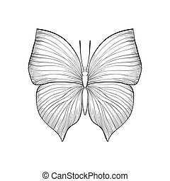 beautiful monochrome black and white butterfly. Hand-drawn...
