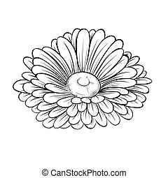 beautiful monochrome black and white daisy flower isolated on white background