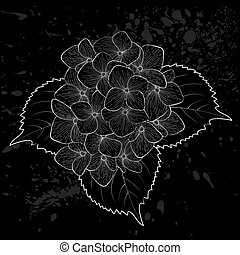 beautiful monochrome, black and white flower hydrangea isolated.